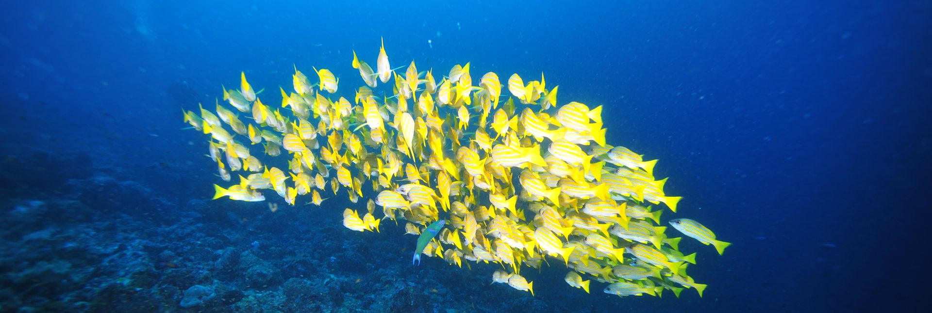 Sea Explorers Diving School